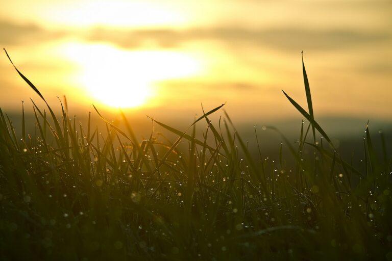 זריחה ודשא עם טל