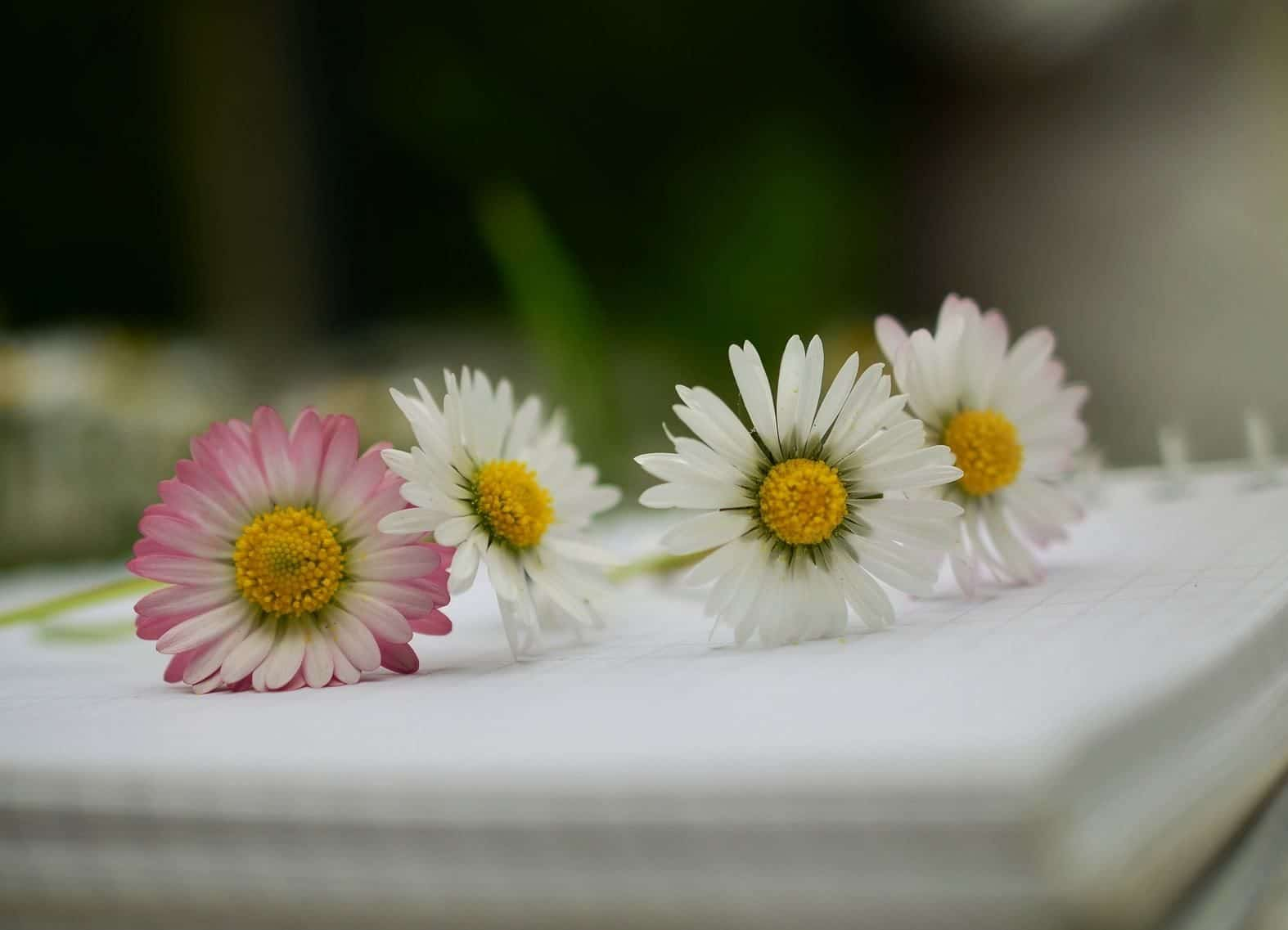 מחברת דף חדש עם פרחים מונחים עליה