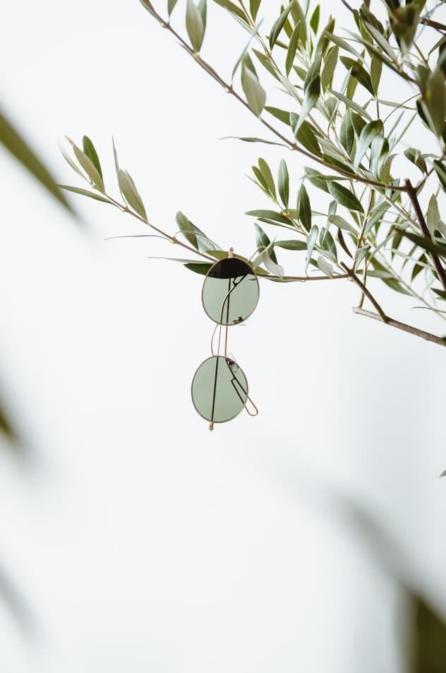 משקפי שמש תלויים על עץ זית