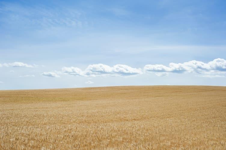 שדה חיטב ושמיים כחולים