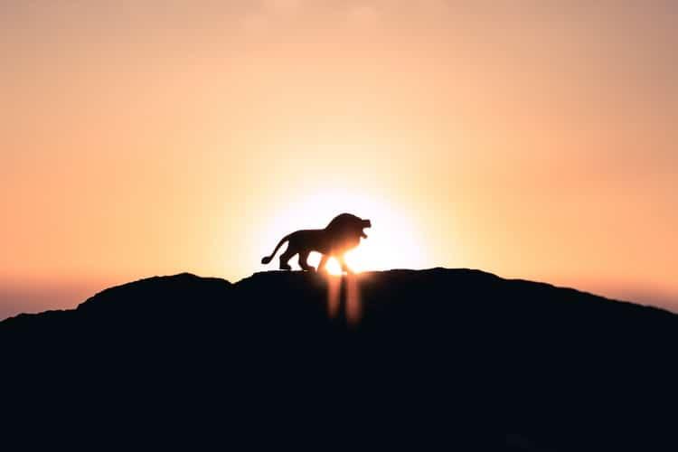 אריה בזריחה