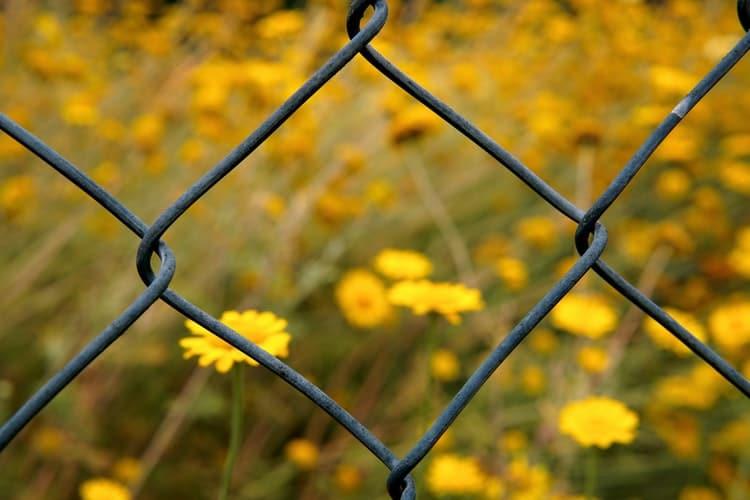 גדר ומאחוריה פרחים