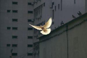 לרדוף אחרי שלום