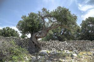 ארץ ישראל המבחן האמיתי