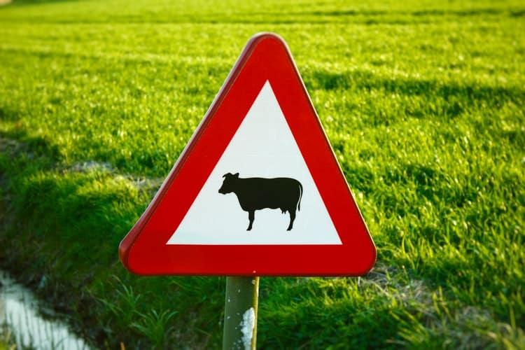תמרור- פרות בדרך