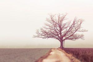 עץ חיים היא למחזיקים בה