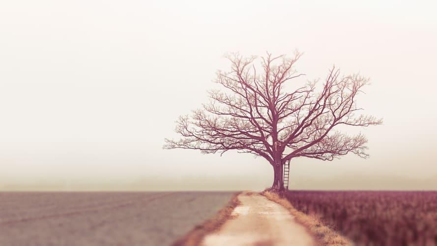 עץ עם סולם