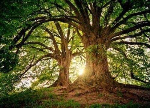 It's not the tree, it's the ingratitude