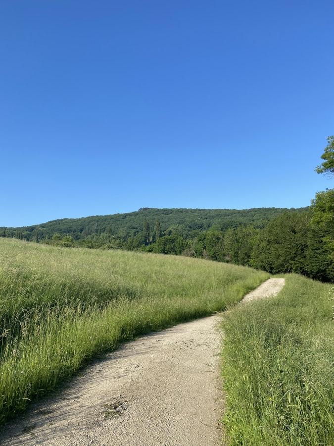 דרך בשדה חיטים